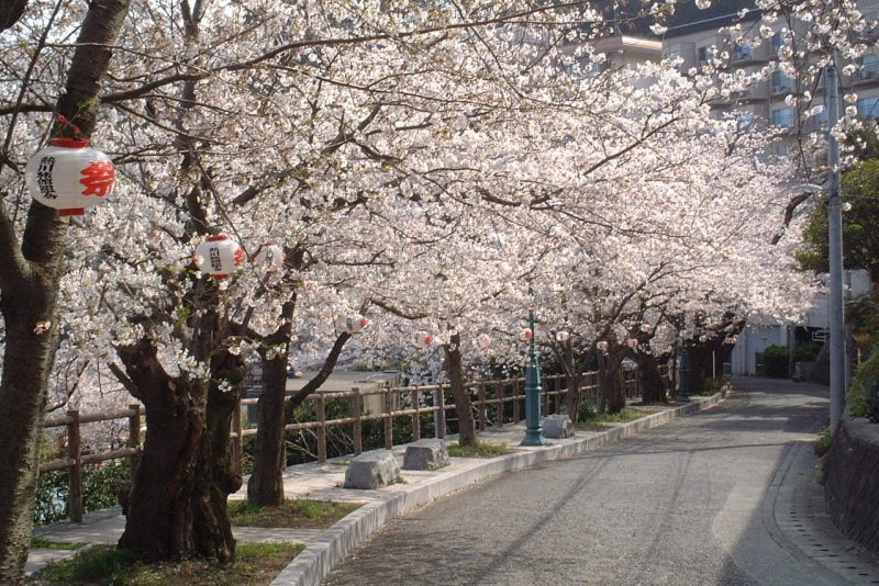 Spring Atagawa Onsen Walking Course