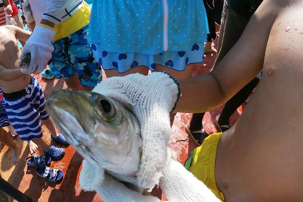 【新型コロナウィルスを考慮し中止といたします】【8月21日~23日】ちびっこ魚のつかみ取り
